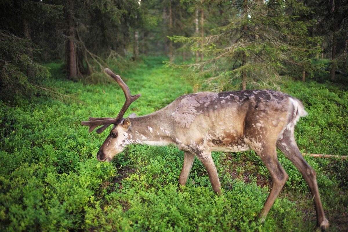 Fínsko na polárnom kruhu