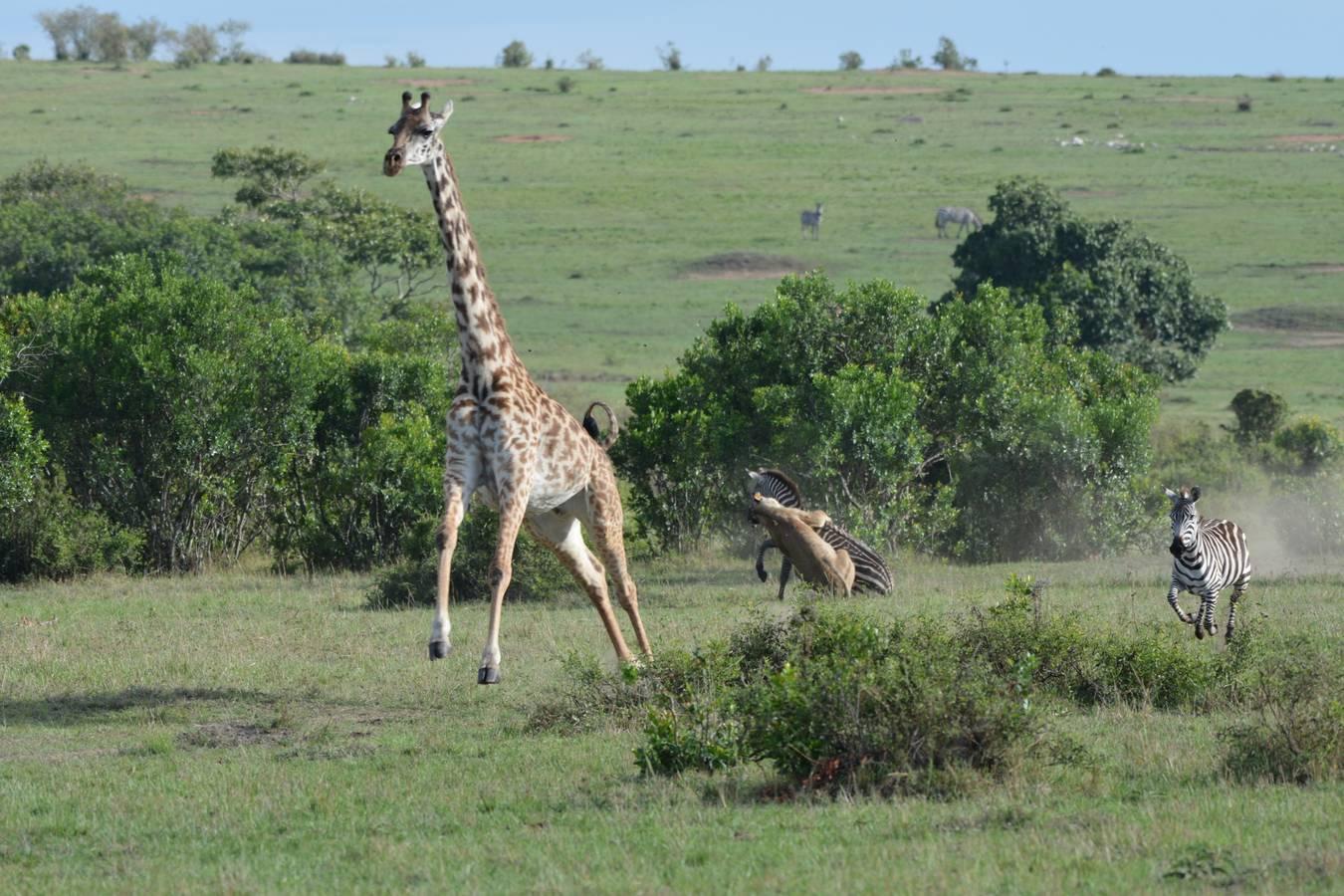 Fotíme zver na safari v Afrike - 2. časť