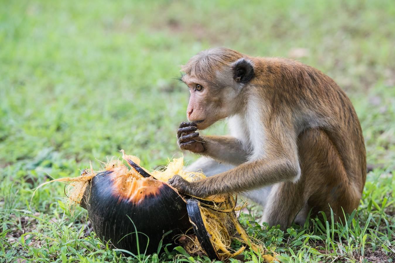 Zvieratá Srí Lanky