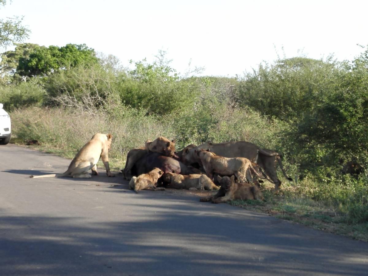 Najlepšia Big 5 v Krugeri