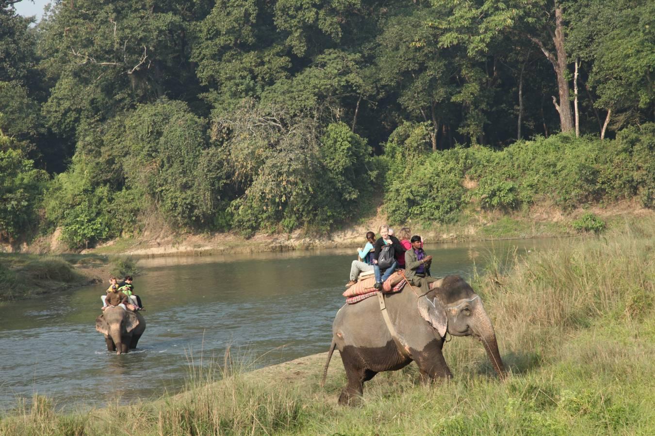 Nosorožce Nepálu