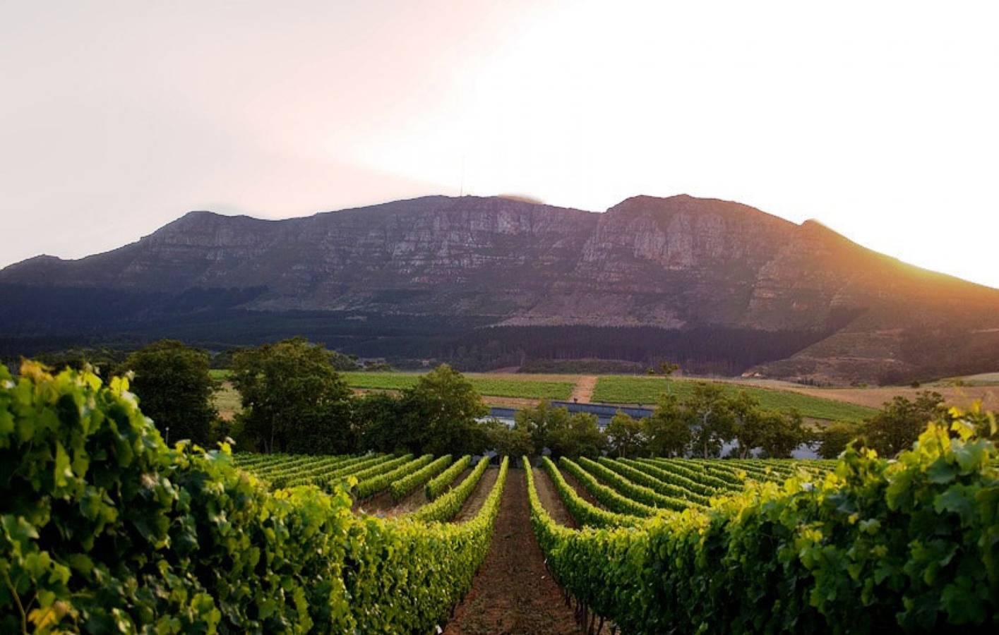 Víno a čokoláda v najstaršom juhoafrickom vinárstve