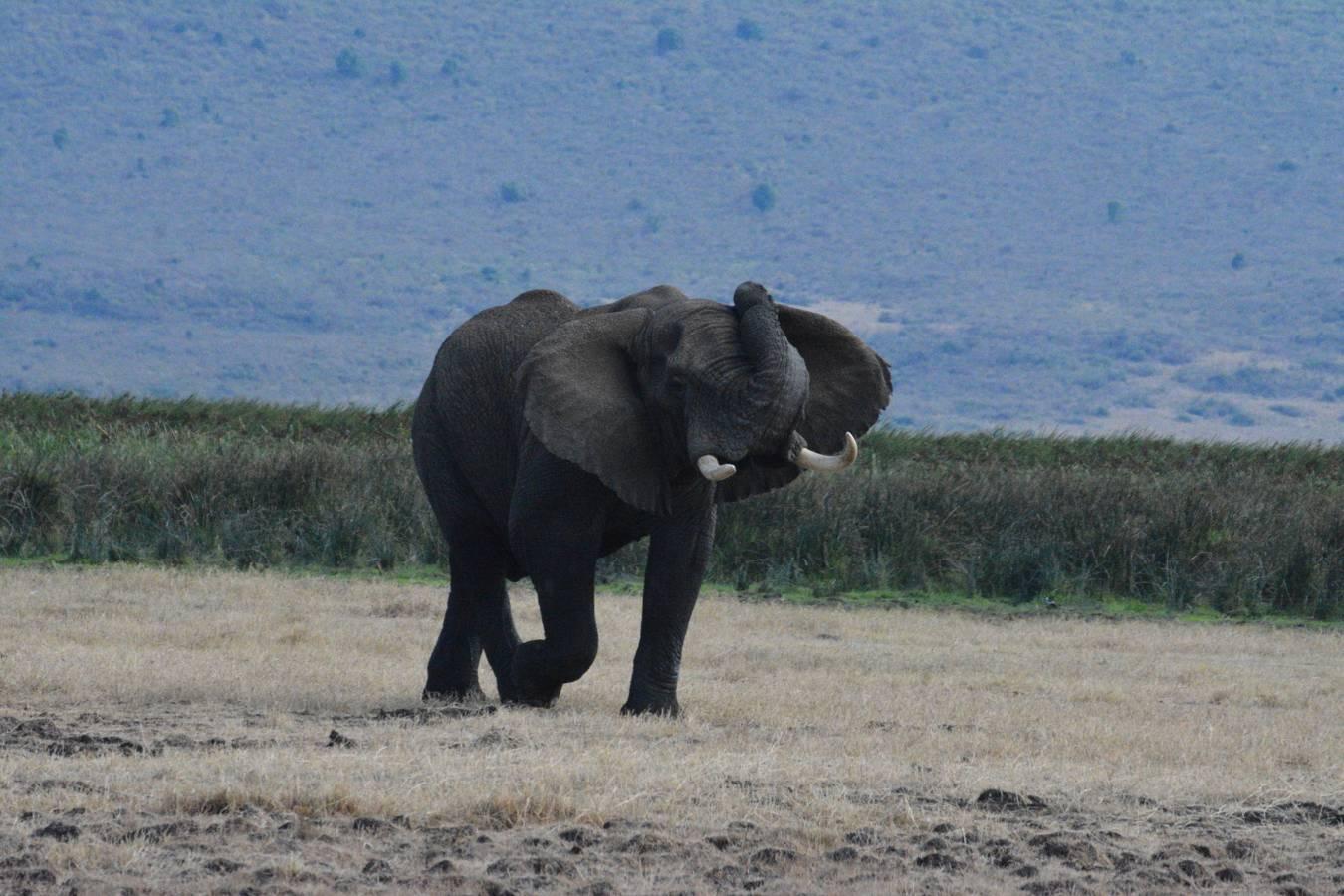 Fotíme zver na safari v Afrike 1. časť