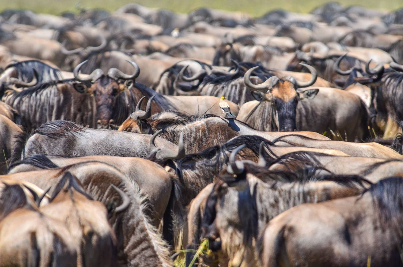 Veľká migrácia - najlepšie safari