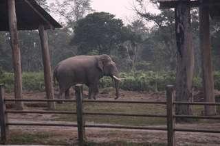 Slony v Chitwane
