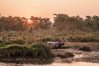 Nepalsky narodny park Chitwan a jeho hry !