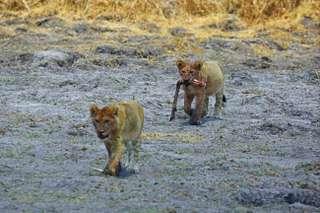 Nxai Pan - malý raj v púšti Kalahari
