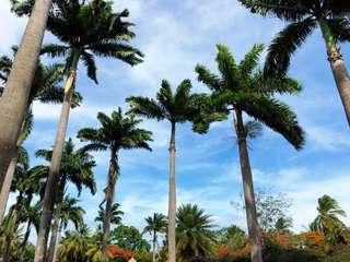 Južné záveterné Antily