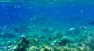 Cairns - koralová bariéra