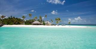 Kokosová palma na nádherných plážach Maldív.