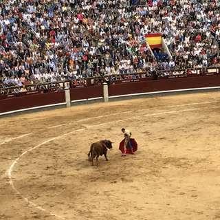 Španielska corrida