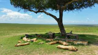 Double Big Five na safari v Keni