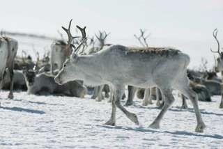 Fínsko - zimná rozprávka