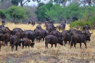 Národný park Moremi wildlife reserve
