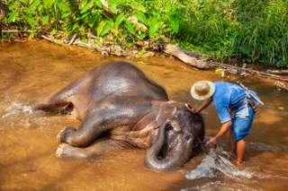 Referencia - Chiang Mai - skúsenosti