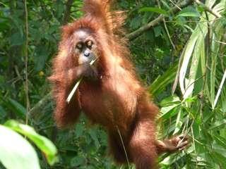 Selamat malam dari Sumatra