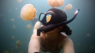Šnorchľovanie s medúzami