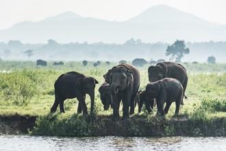 Srilanskí giganti naživo