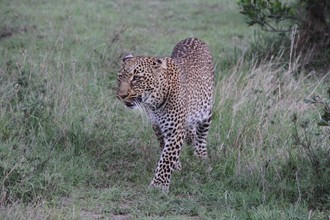 Safari, na ktoré sa nezabúda