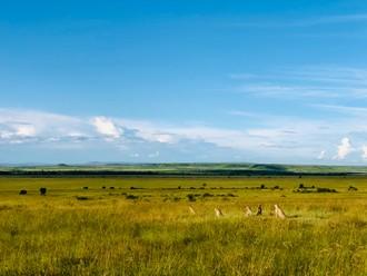 Päť bratov z Masai Mara