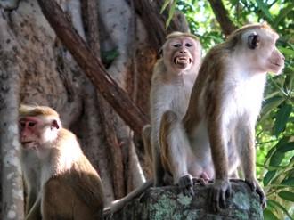 Ako vychádzať s makakom