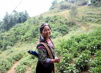 Kmene čiernych Hmongov