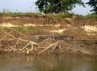 Poriadna krokodília nádielka a nosoroží bonus na záver