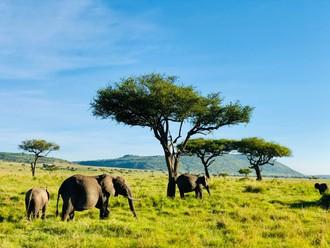 Slony v Maasai Mare