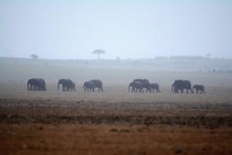 Slony v lejaku