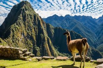 Korona v Peru