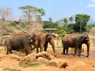 Sloní sirotinec - Pinnawala