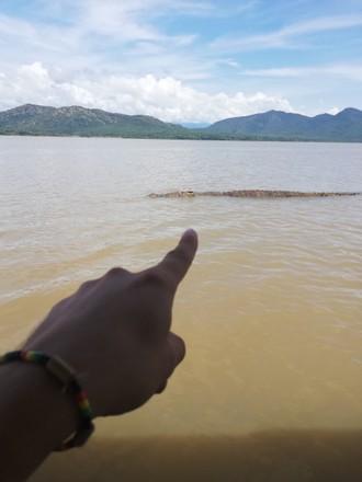 Najväčšie africké krokodíly