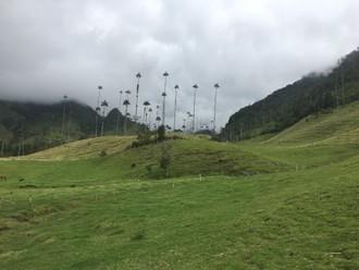 Kokové plantáže