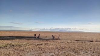 V Maasai Mara padali rekordy