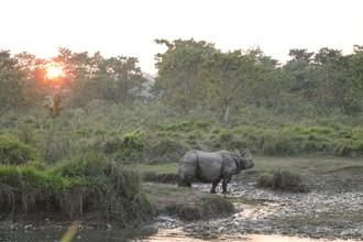 Západ slnka s nosorožcom