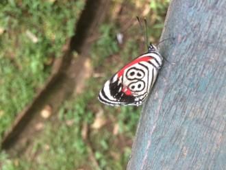 Veľa vody a motýľov
