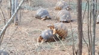 Dedinka korytnačiek