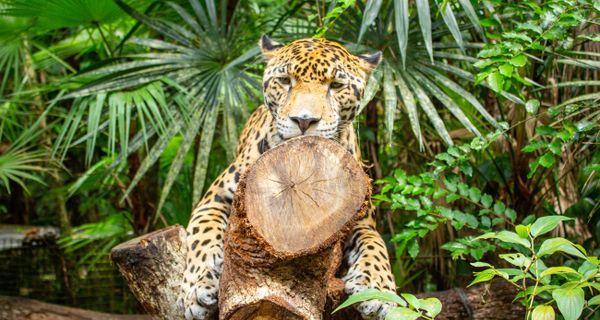 Všetko, čo treba zažiť v Belize