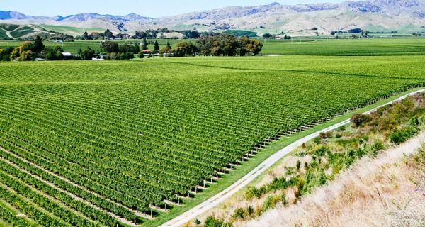 Babich - perla vín na Novom Zélande