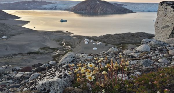 Grónske delirium arcticum