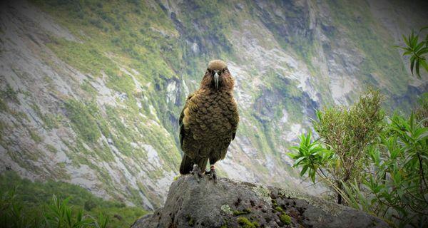 Nový Zéland – vtáčia archa na druhom konci sveta