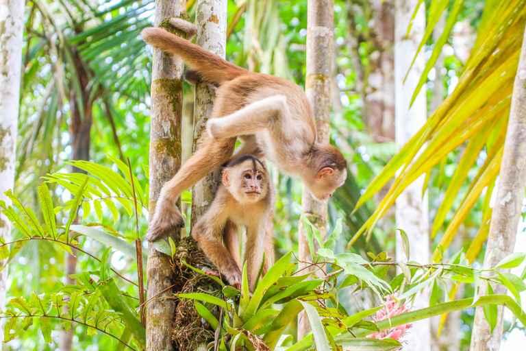Dovolenka Amazónia a Kolumbia