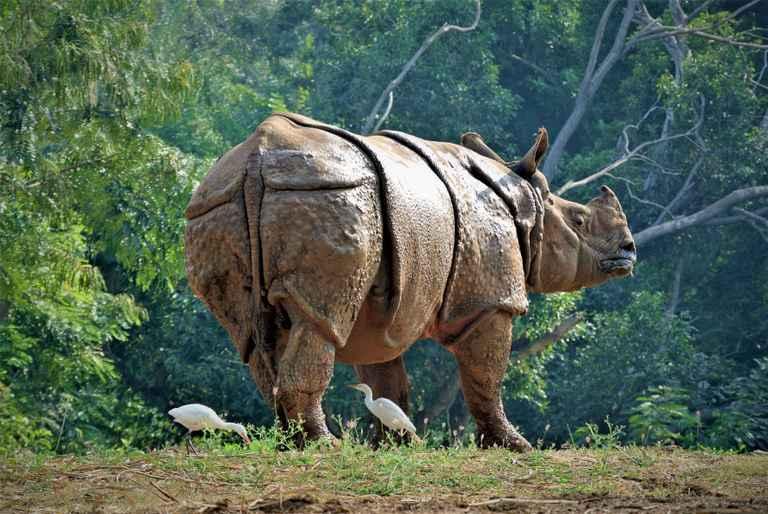 Dovolenka India – nosorožce, budhizmus a najdaždivejšie miesto Zeme