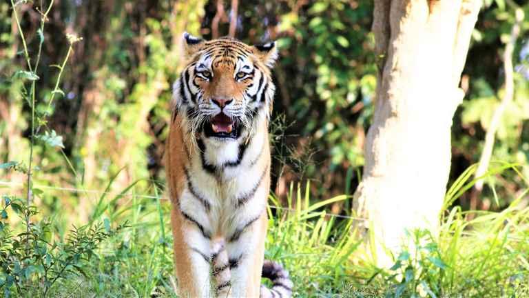 Dovolenka India - tigre a gháty