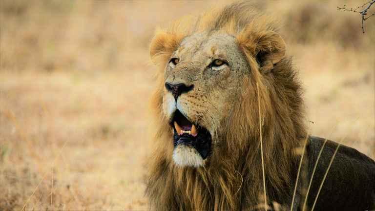 Dovolenka Najlepšie safari a Zanzibar