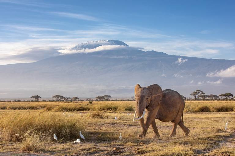Keňa, Tanzánia, Zanzibar - 2020