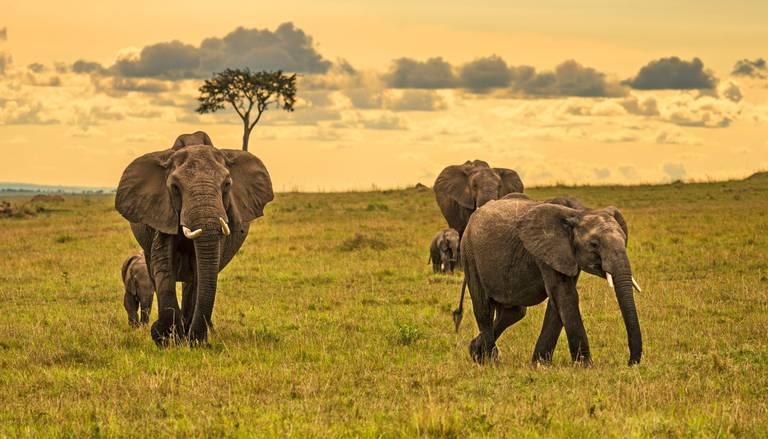 Keňa, Tanzánia, Zanzibar