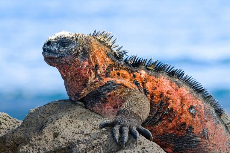 Kolumbia-Ekvádor (Galapágy)