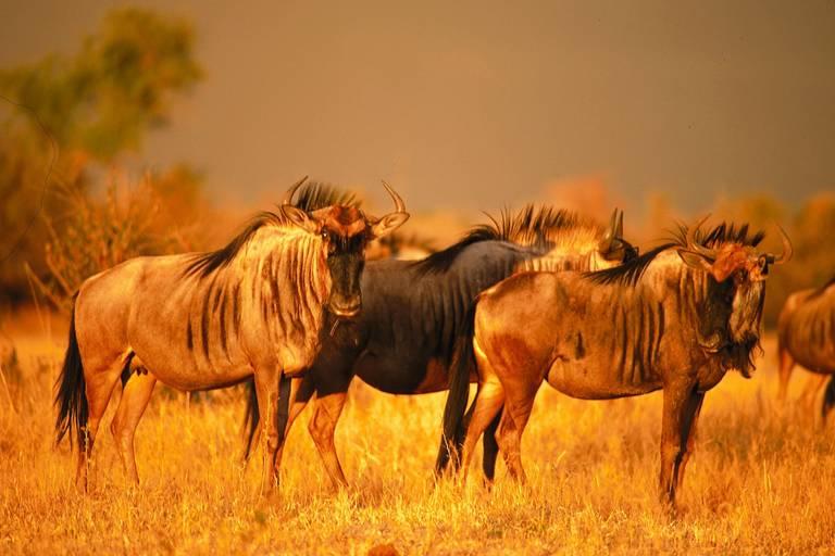 Safari v JAR, eSwatini, Lesotho a Zanzibar