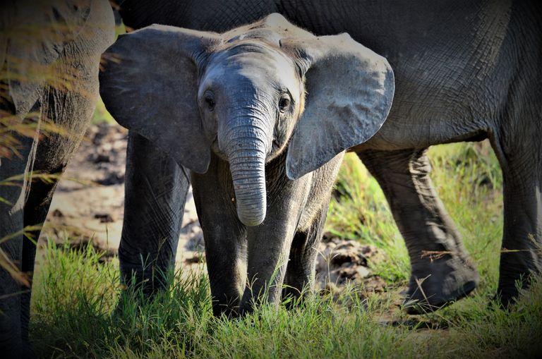 Dovolenka Keňa - najlepšie národné parky